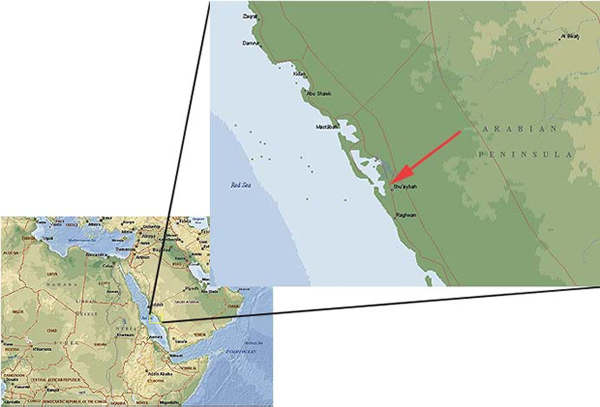 Saudi_Aramco_Shoaiba_Terminal__Tank_Farm_Map1